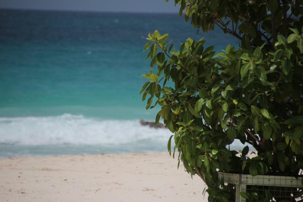 plage soleil decembre credit photo upupup caraibes