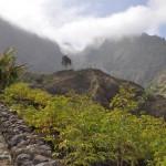 Dans la vallée luxuriante de Sao Vicente