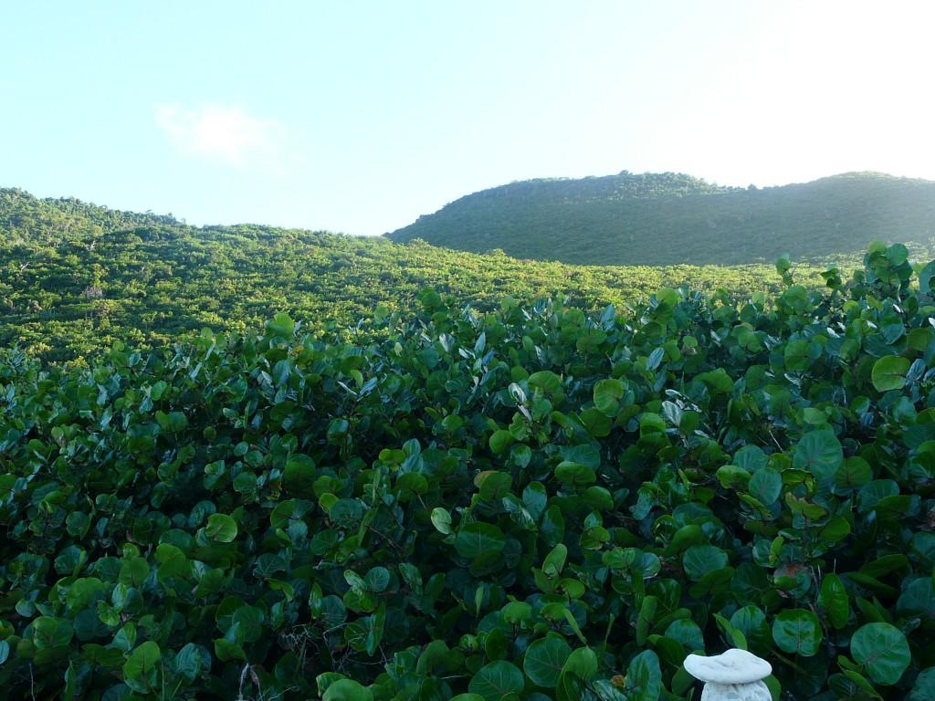 chemin des froussards saint martin randonne caraibes