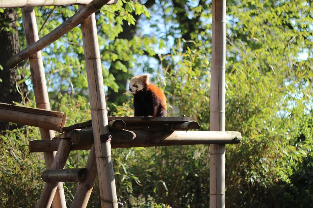 menagerie jardin des plantes zoo urbain paris
