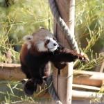 Zoo à Paris – Ménagerie du Jardin des plantes