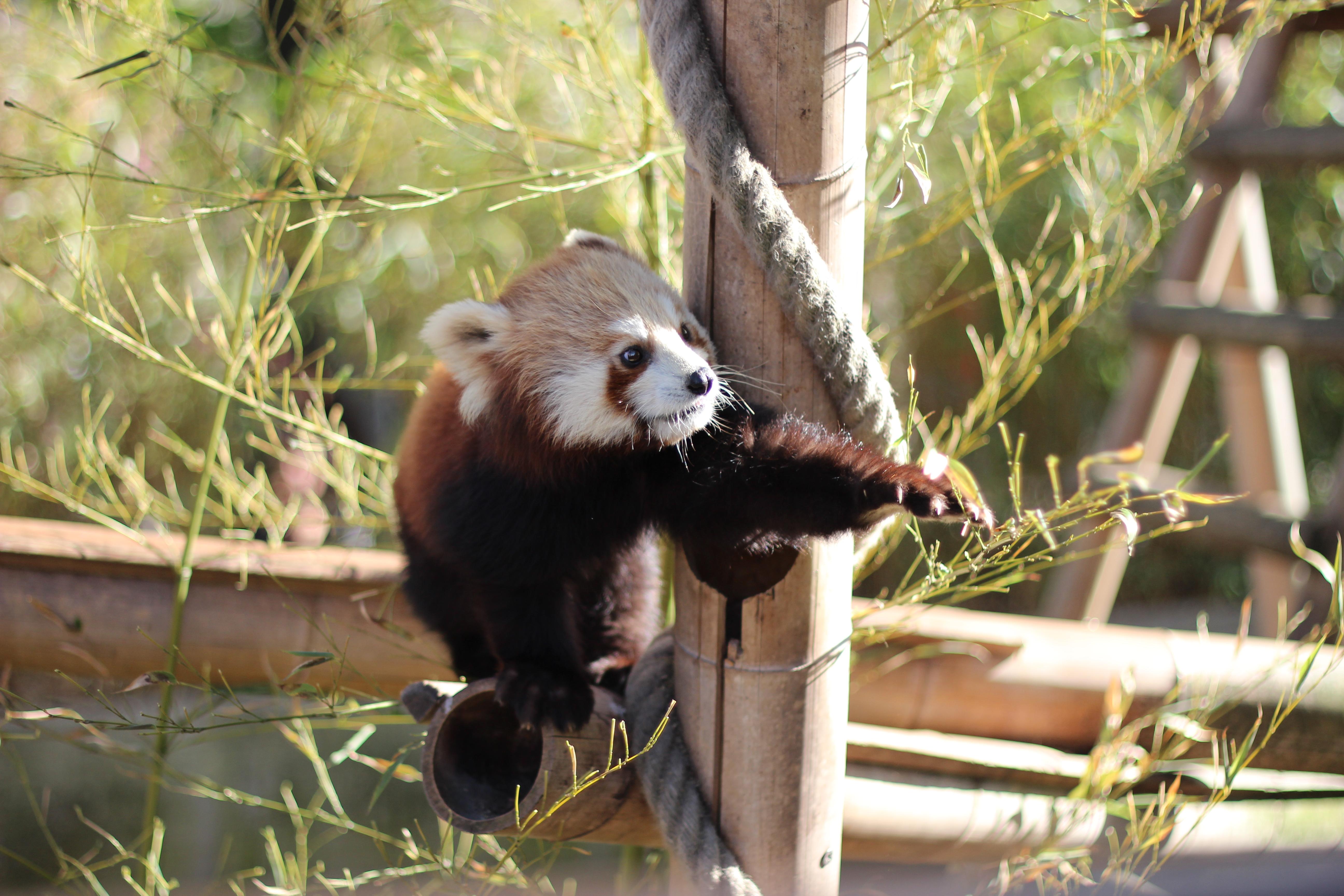 Zoo paris m nagerie du jardin des plantes blog in the air - Zoo de paris jardin des plantes ...