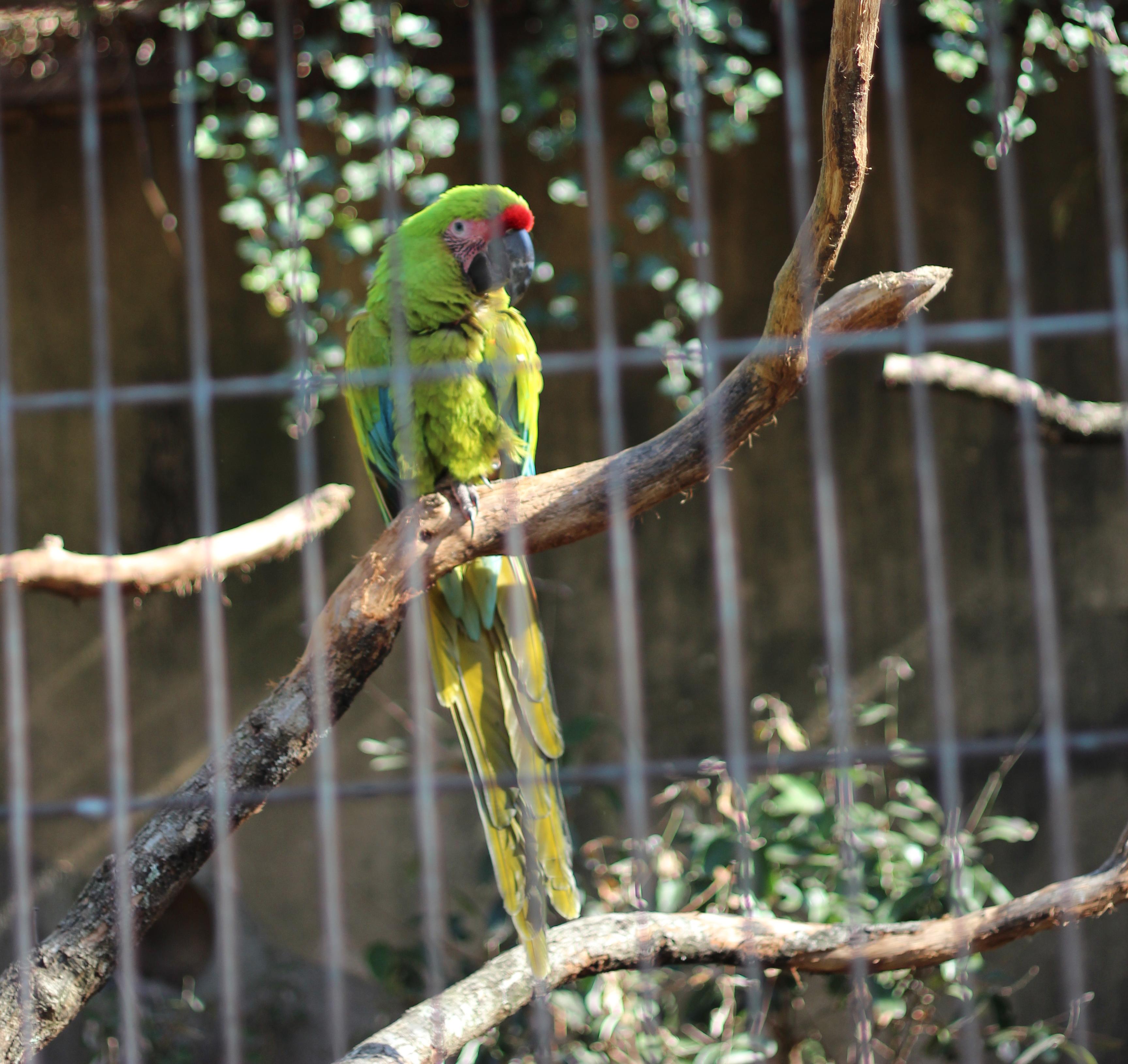 Menageries jardin des plantes blog in the air - Zoo de paris jardin des plantes ...