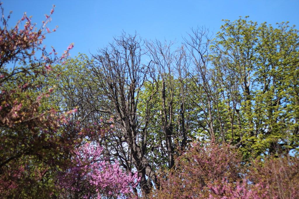 menageries jardin des plantes zoo urbain paris