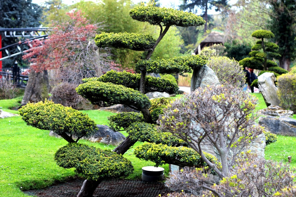 jardin japonais