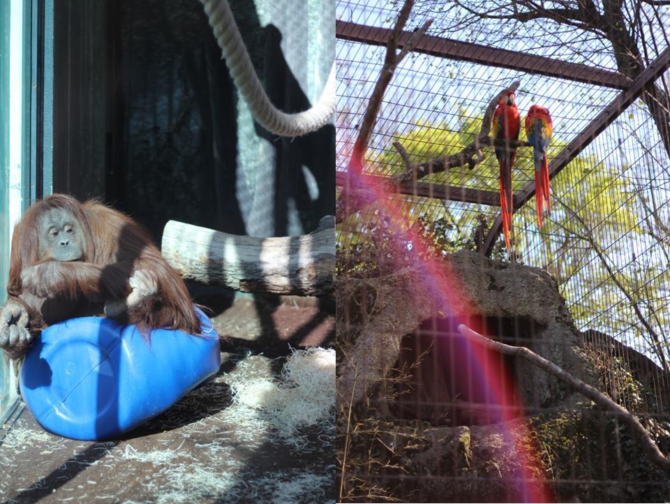 zoo_paris_jardinsdesplantes