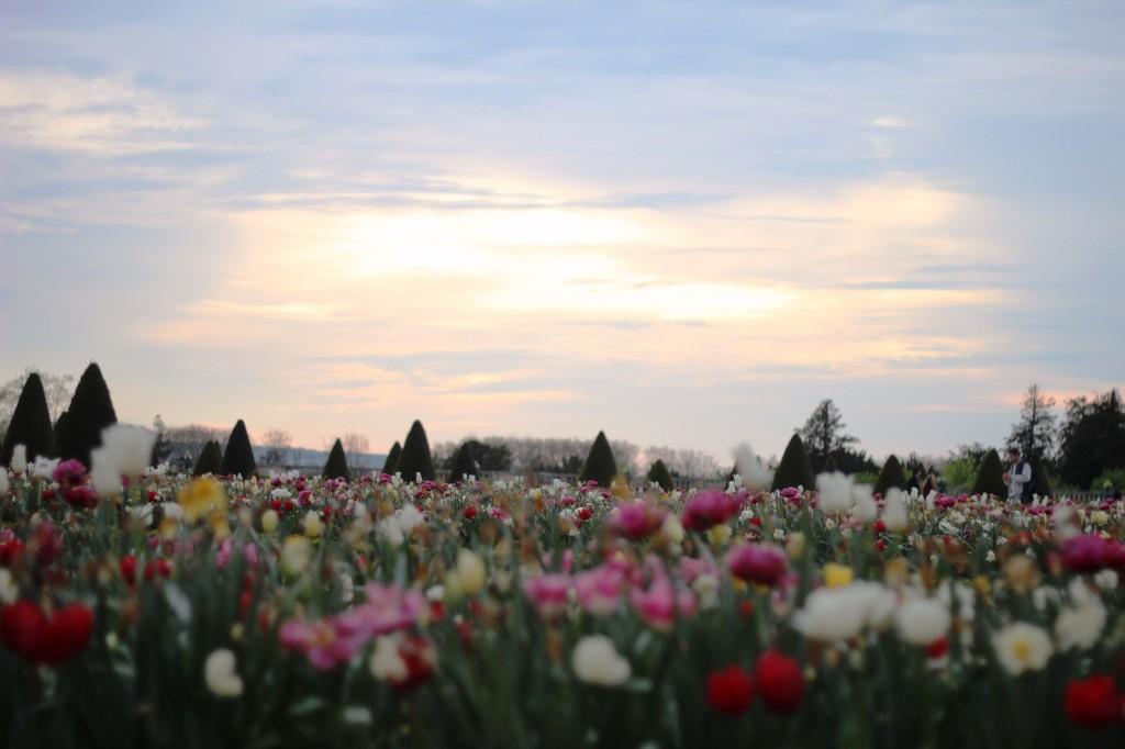 versailles blooming (c) upupup.fr