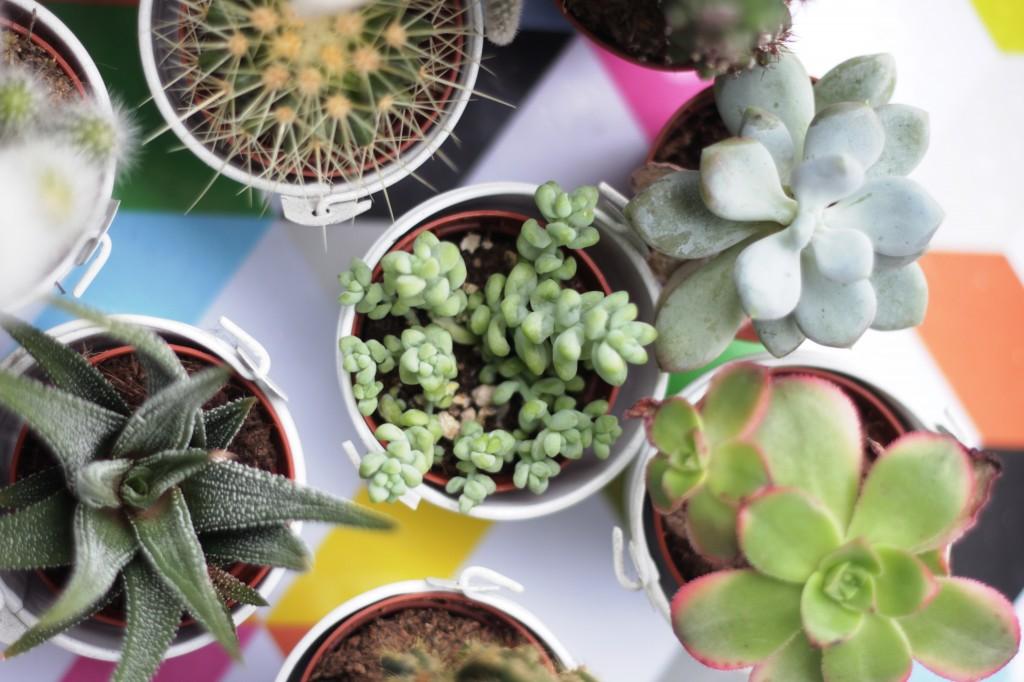 1 cactus musical blog rubrique lifestyle playlist photos (c) upupup.fr