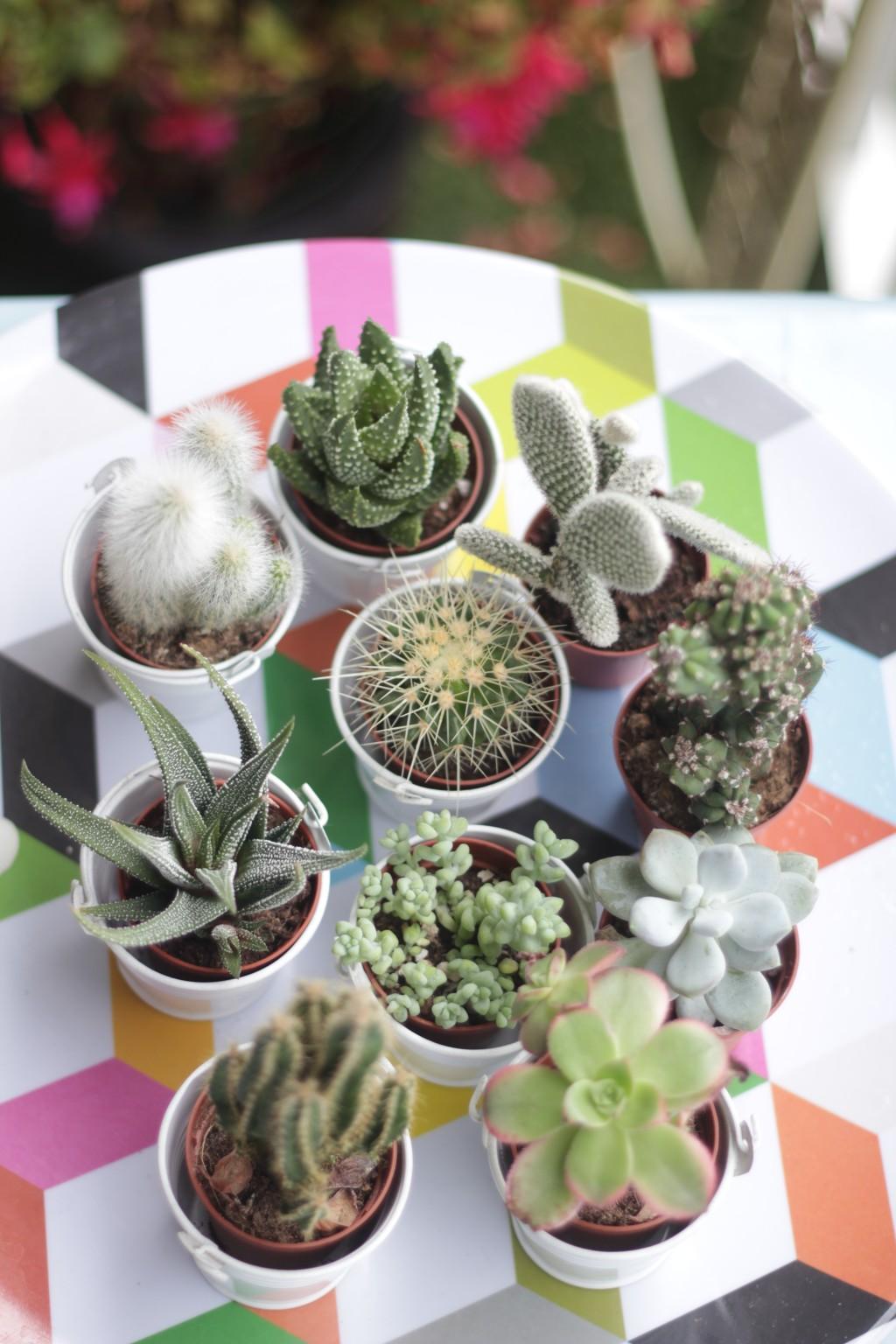 5 cactus musical blog rubrique lifestyle playlist photos (c) upupup.fr