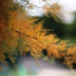 Hello l'automne