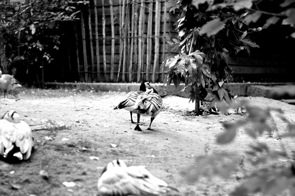 zoo lille blog mode voyage upupup.fr 4