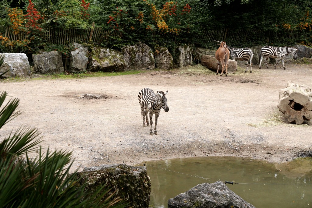 zoo lille blog mode voyage upupup.fr 6