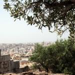 Athènes, sous l'olivier.