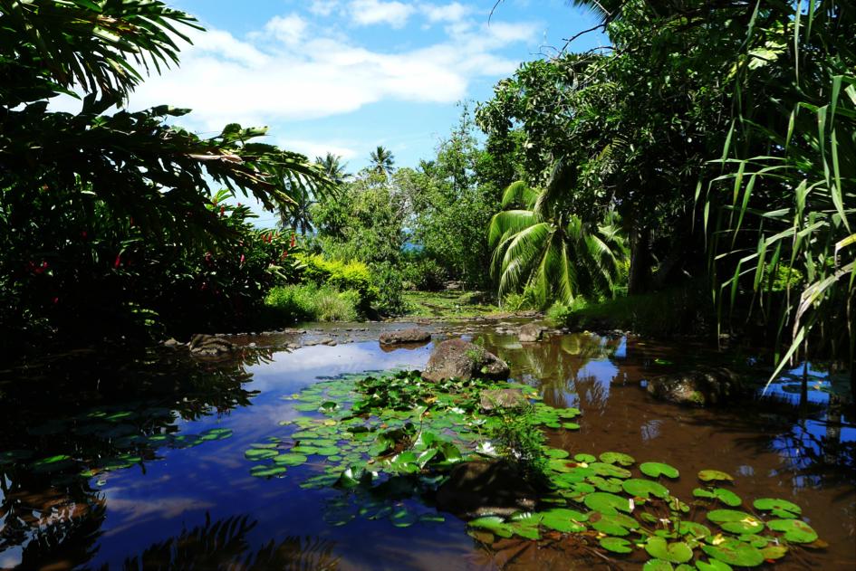 les jardins d'eaux de Vaipahi 1
