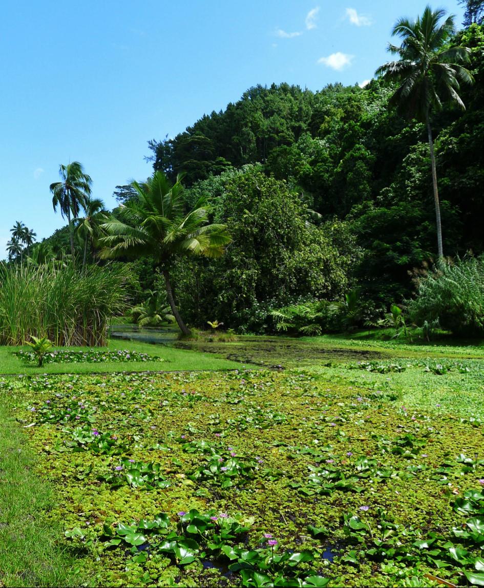les jardins d'eaux de Vaipahi 2