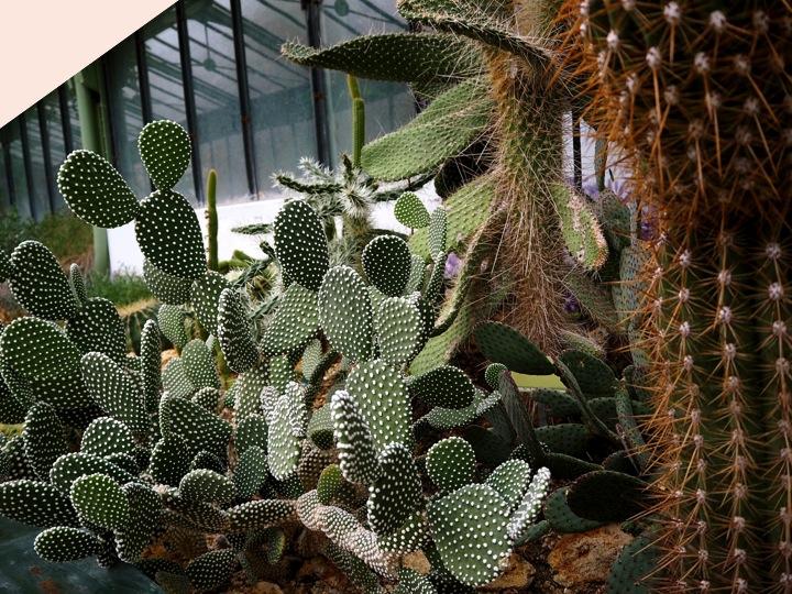 2-1-serre-jardin-plantes-paris-blog-mode-voyage-upupup-fr-khlauda