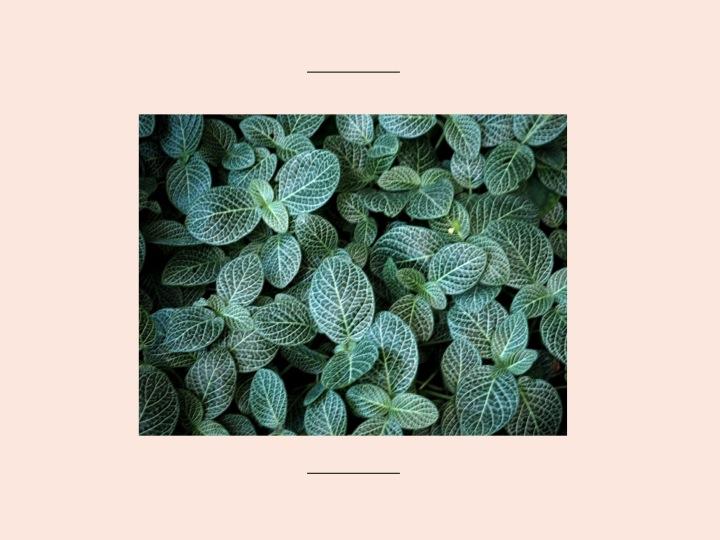 5-serre-jardin-plantes-paris-blog-mode-voyage-upupup-fr