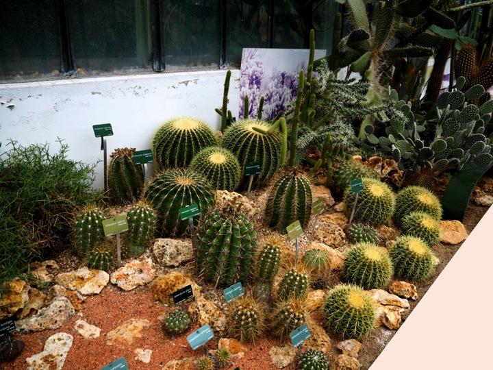 6-serre-jardin-plantes-paris-blog-mode-voyage-upupup-fr