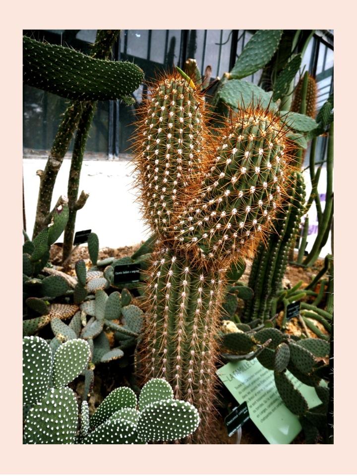 7-serre-jardin-plantes-paris-blog-mode-voyage-upupup-fr
