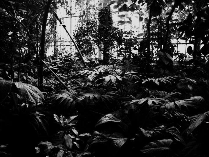 8-serre-jardin-plantes-paris-blog-mode-voyage-upupup-fr