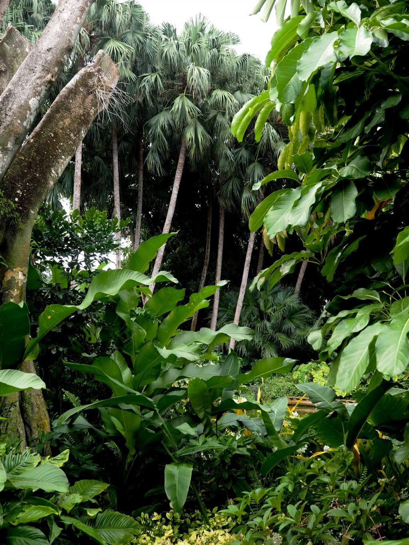 Un jardin botanique en guadeloupe for Camping le jardin botanique limeray