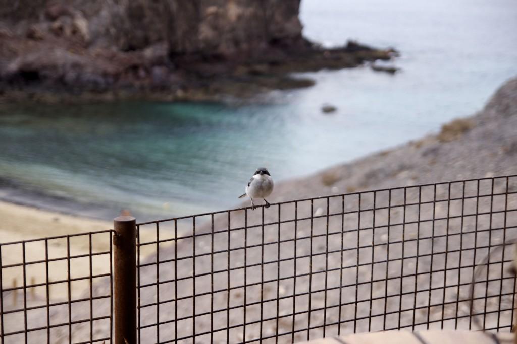Playa Papagayo Lanzarote Blog Mode Voyage upupup.fr 4