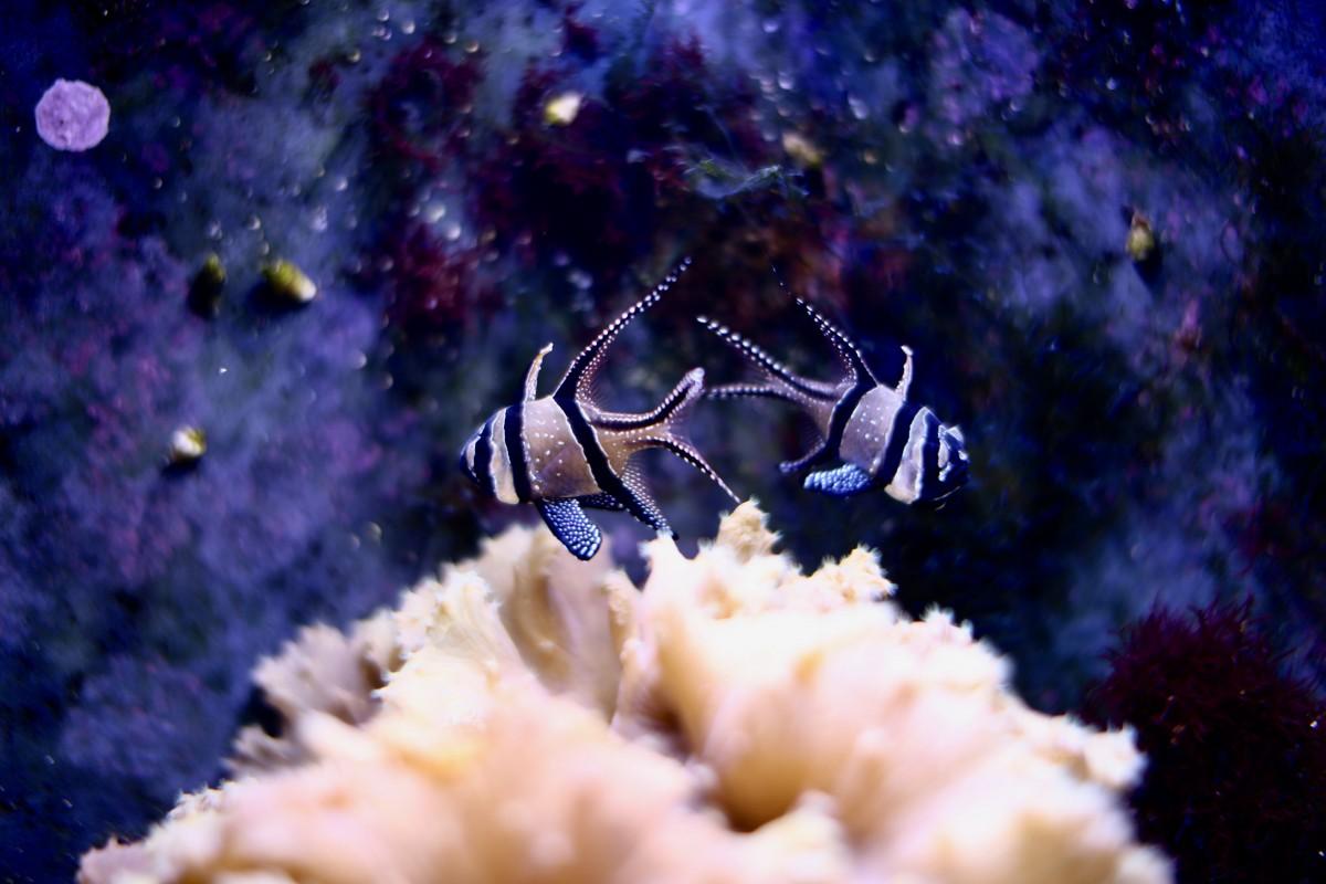 1 blog upupup blog mode voyage boulogne sur mer nausicaa copyright www.upupup.fr