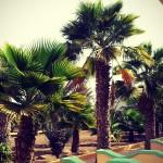 Cap Vert – Alentours de Santa Maria au sud de Sal