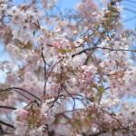 Spring fever ♫