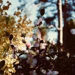 Atelier Floral avec Georges Delbard